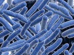 Human Microbiota: The Residential Microbes of Human Body and Their Potential Pathogenicity