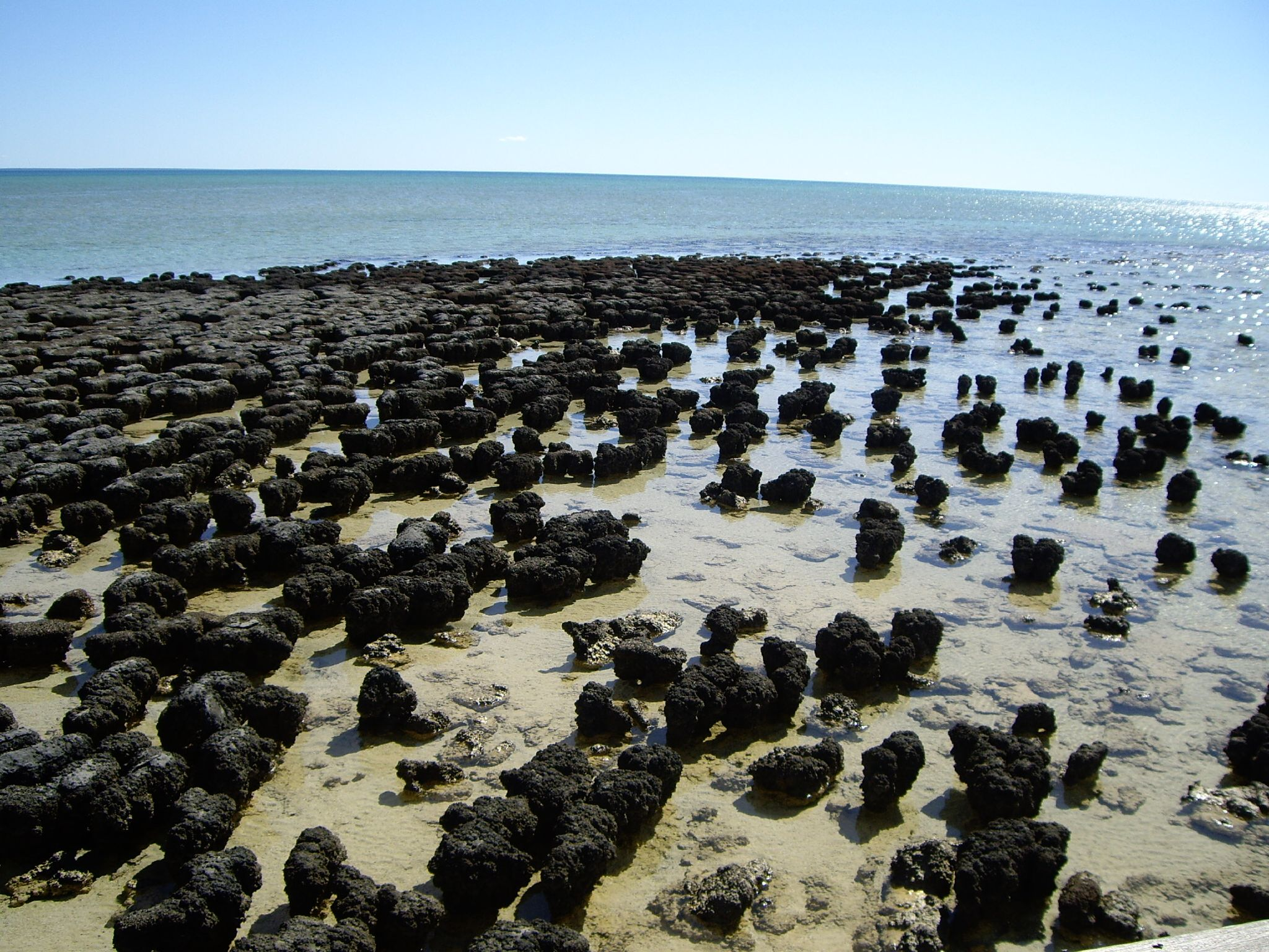 Stromatolites_in_Shark_Bay